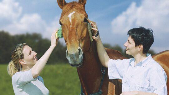 CAV Reitbeteiligung auf Schulpferden