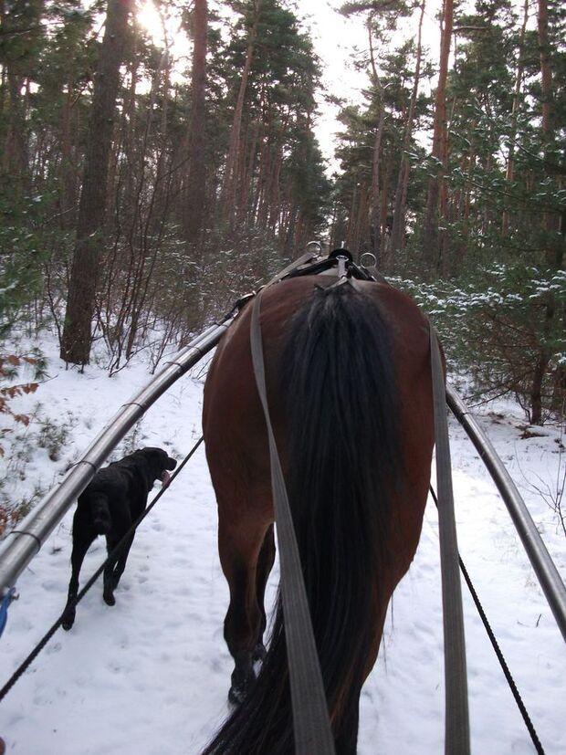 CAV Reiten im Winter Pferde im Winter