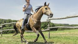 CAV Reiter ohne Zaumzeug