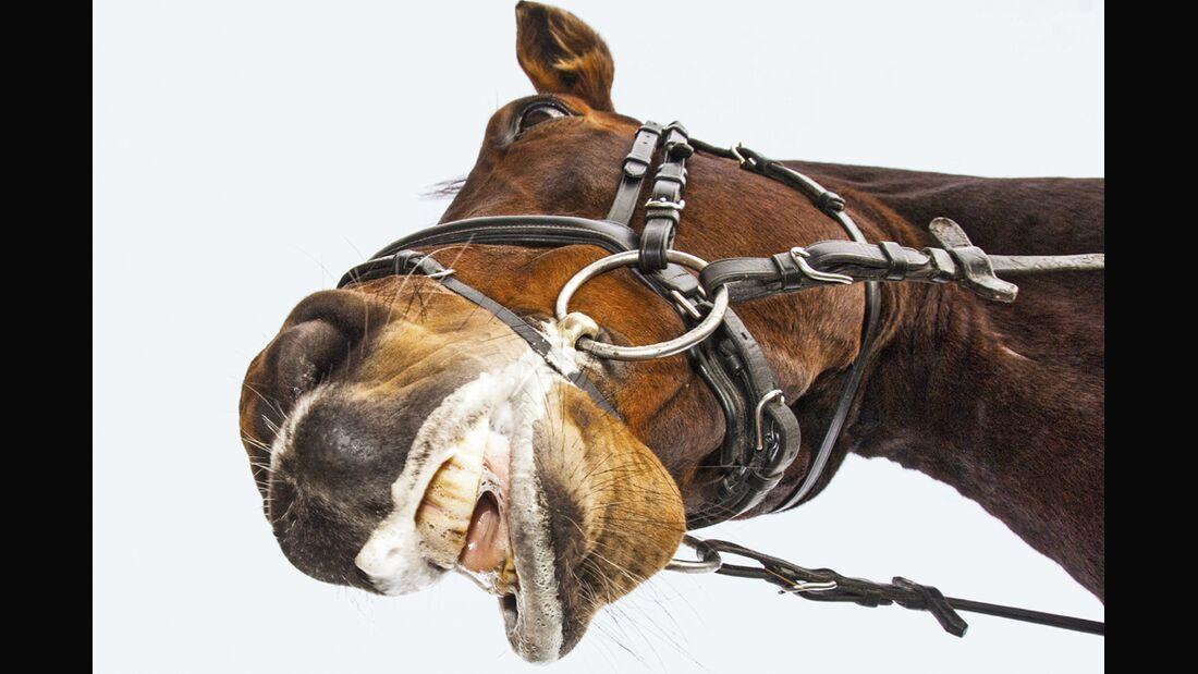 CAV Reithalfter Messungen Pferd Aufmacher US