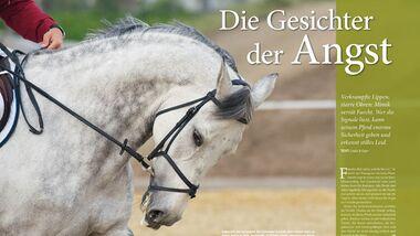 CAV Relaunch Cavallo