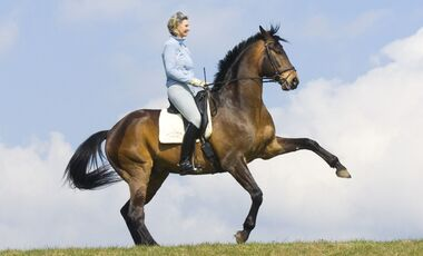 CAV Sabine Ellinger Dressur Reiten Pferd
