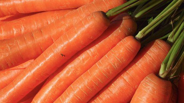 CAV Saftfutter Karotten Möhren