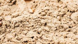 CAV Sand Reitplatz 1