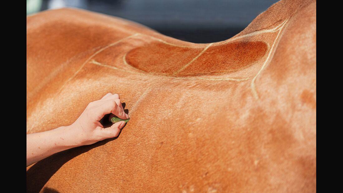 CAV Sattel Pferderücken