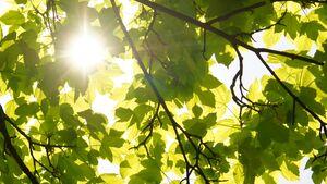 CAV Schattenspender Schatten Baum