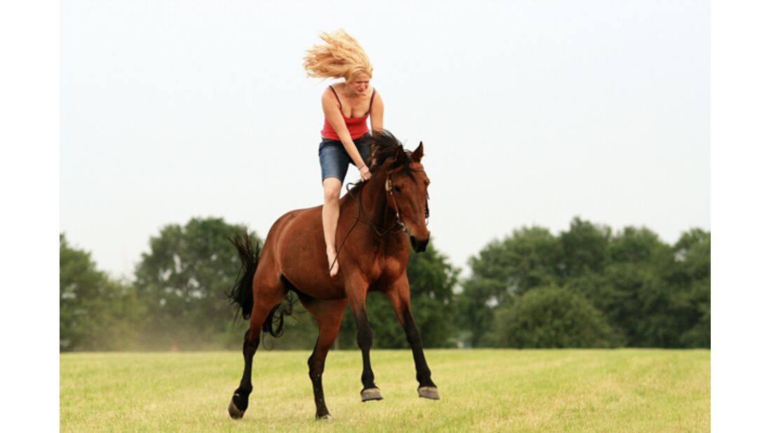 CAV Schräg Witzig Skurril aus der Pferdewelt Pferdefotos 11