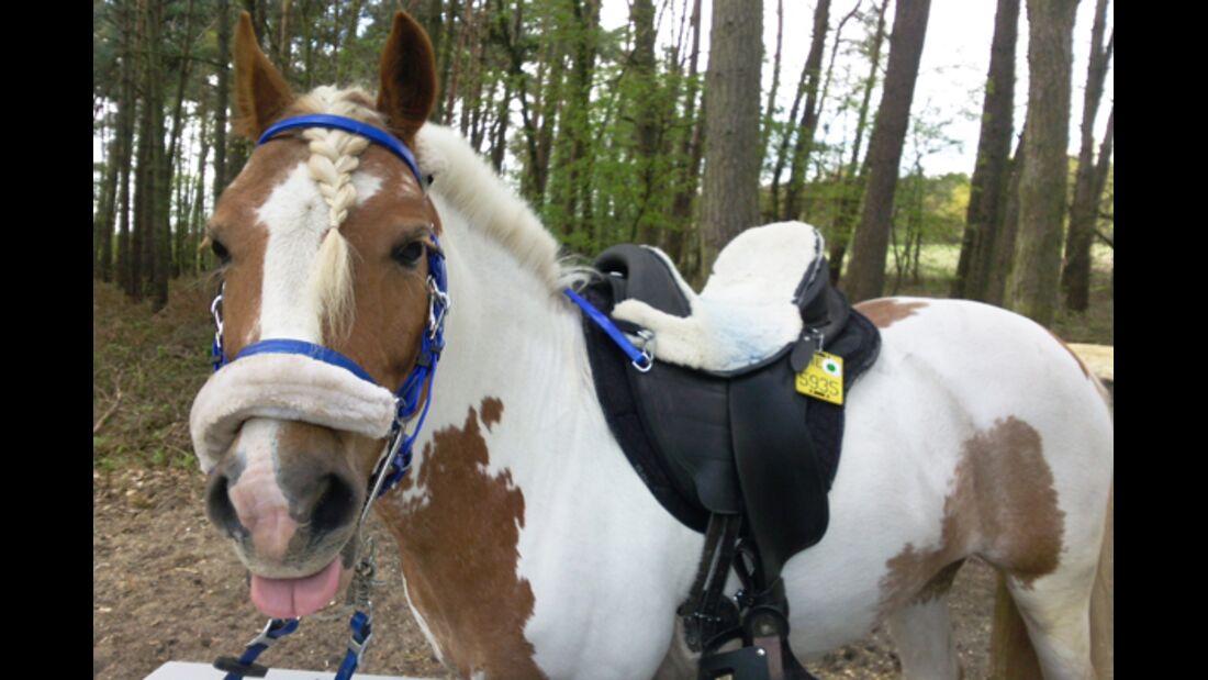 CAV Schräg Witzig Skurril aus der Pferdewelt Pferdefotos 6