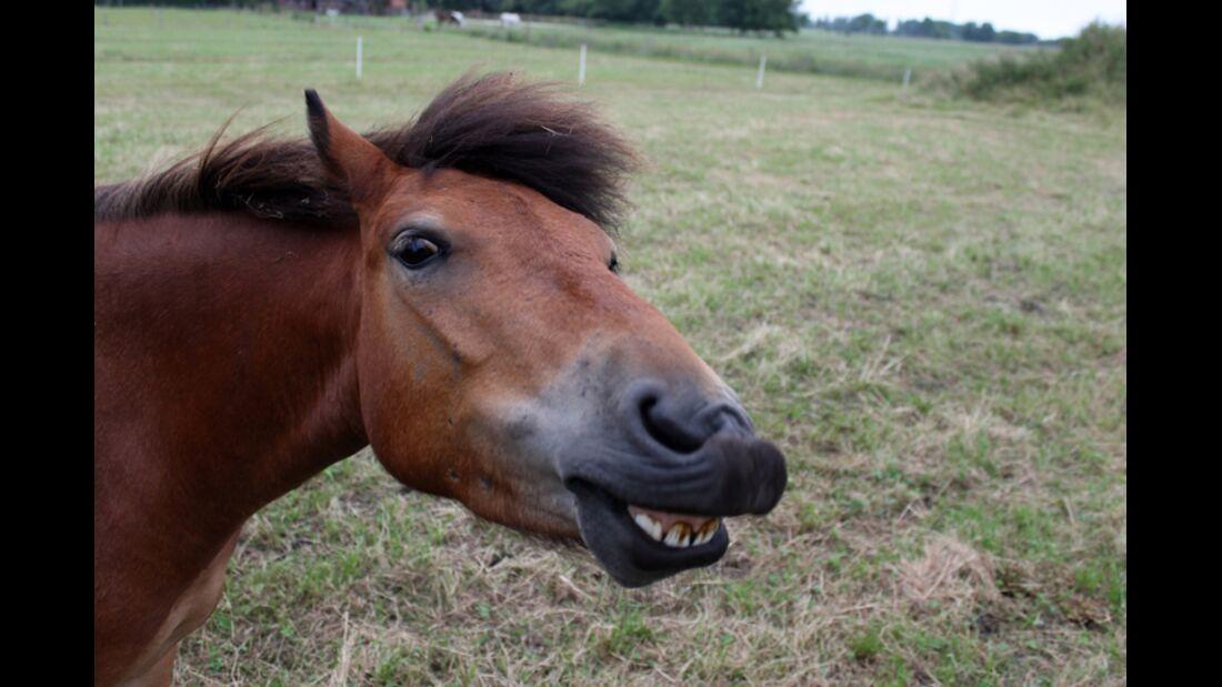 CAV Schräg Witzig Skurril aus der Pferdewelt Pferdefotos 87