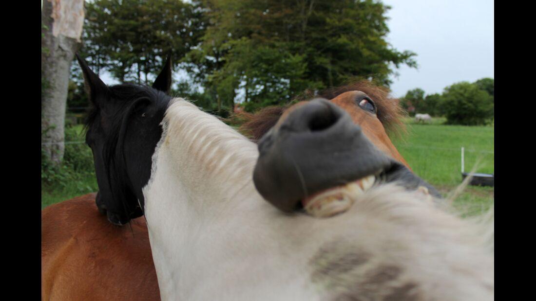 CAV Schräg Witzig Skurril aus der Pferdewelt Pferdefotos 88