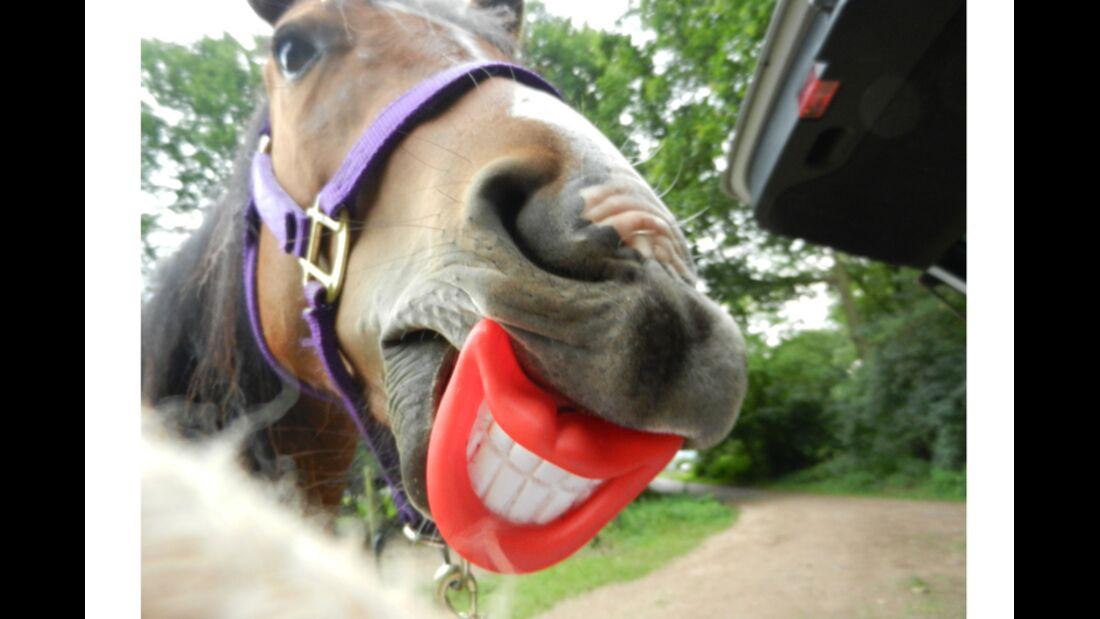 CAV Schräg Witzig Skurril aus der Pferdewelt Pferdefotos Scooby 1