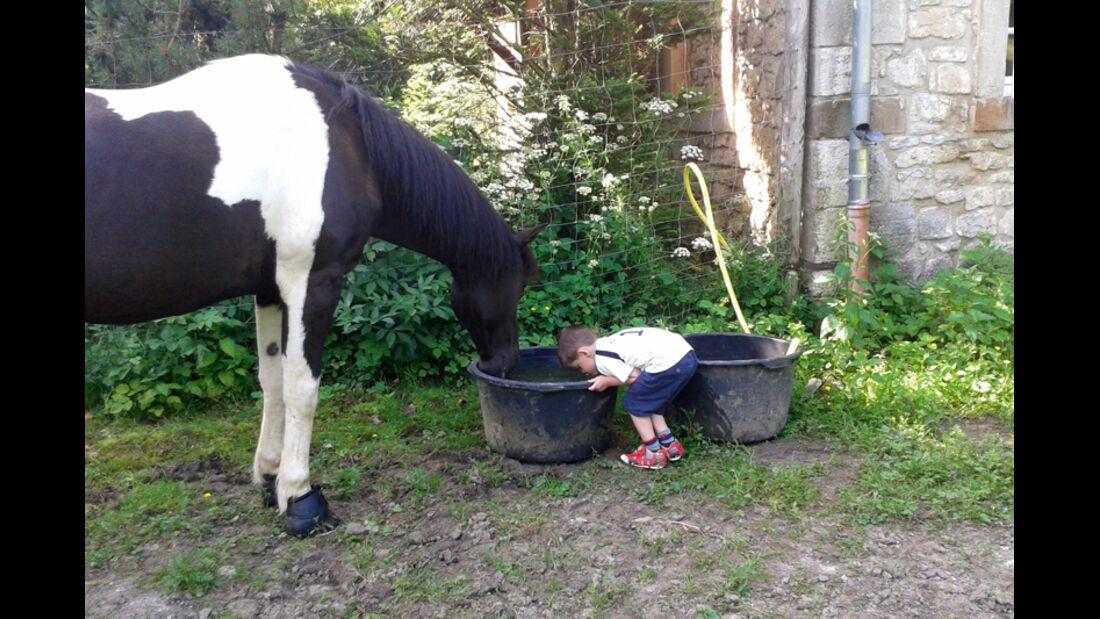 CAV Schräg Witzig Skurril aus der Pferdewelt Pferdefotos Silvia Peschel