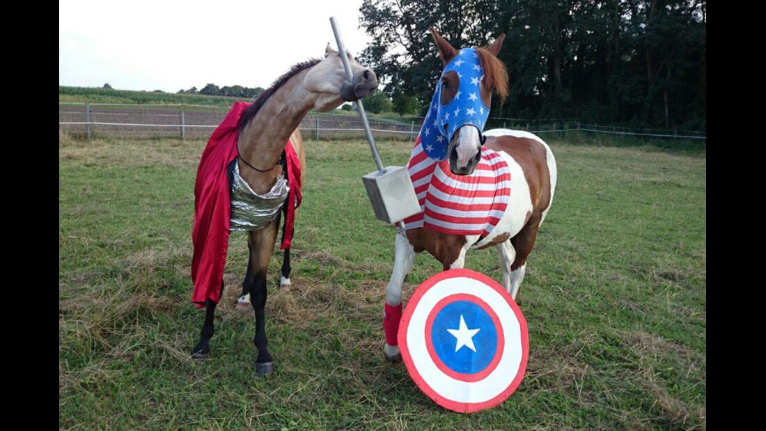 CAV Schräg Witzig Skurril aus der Pferdewelt Pferdefotos canis_lupus