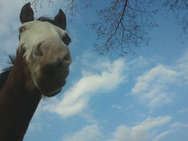 CAV Schräge Pferdefotos Brauner Augen