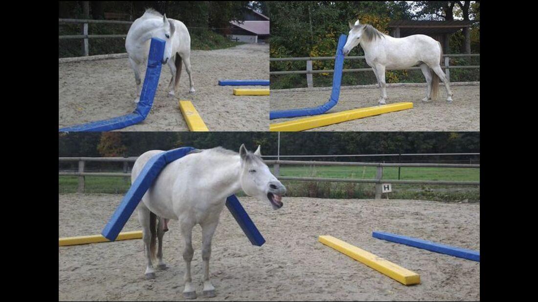 CAV Schräge Witzige Pferdefotos Leserfotos Idir