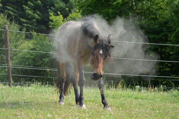 CAV Schütteln nach Wälzen Pferde Leserfotos Stephanie Leib