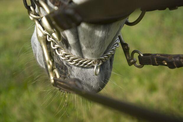 CAV Schulpferde Kandarre Maul Dressur