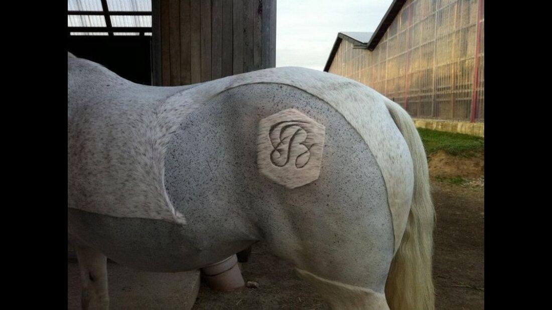 CAV Schur Pferde scheren Fell Fell-Frisur MS