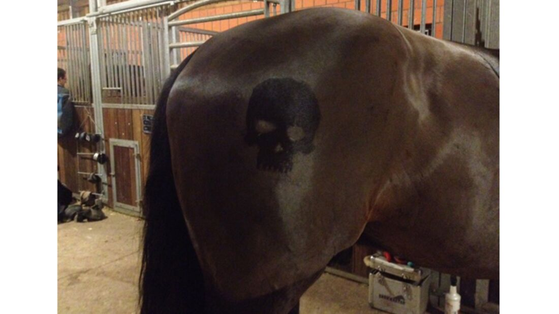 CAV Schur Pferde scheren Fell Fell-Frisur MS 3