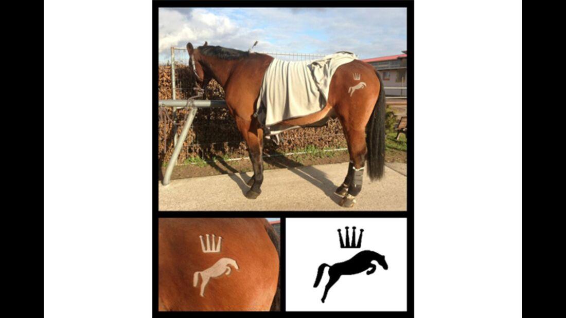 CAV Schur Pferde scheren Fell Fell-Frisur MS 5