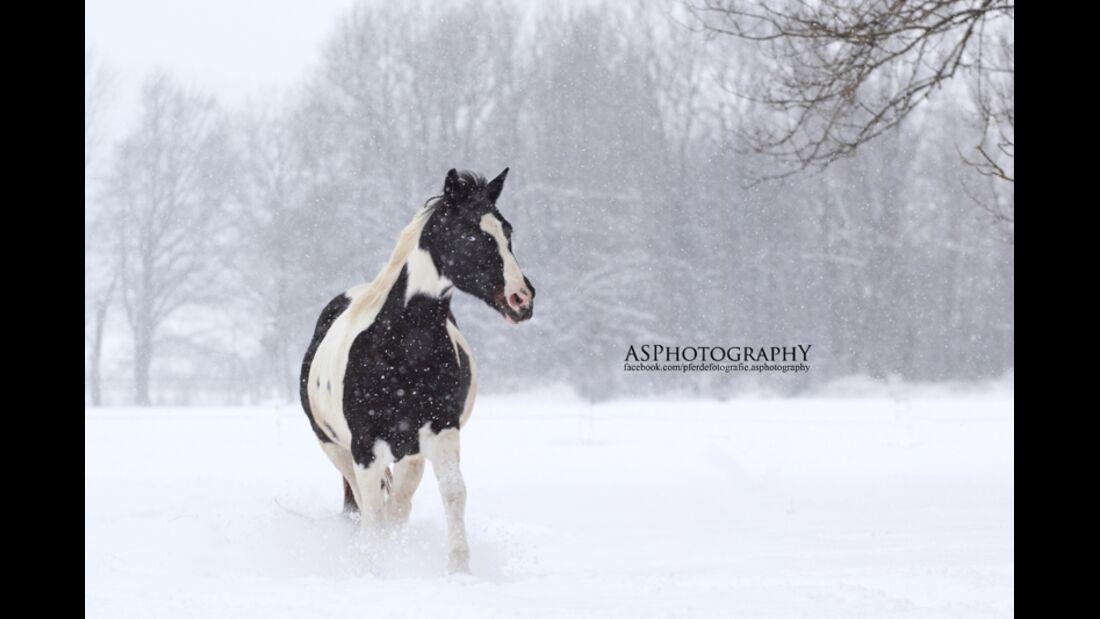 CAV Senioren Rentner Leserfotos alte Pferde Teil II AS Photography
