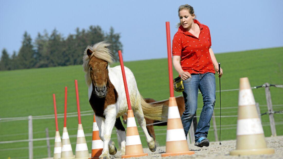 CAV Shetty Pony GHP