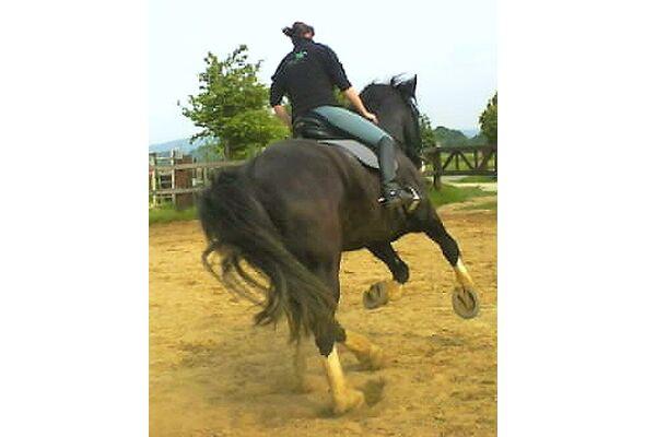 CAV Shire Horses Ridgmont Bandmaster 10