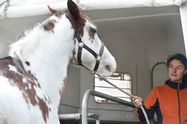 CAV Sinne Pferde 5