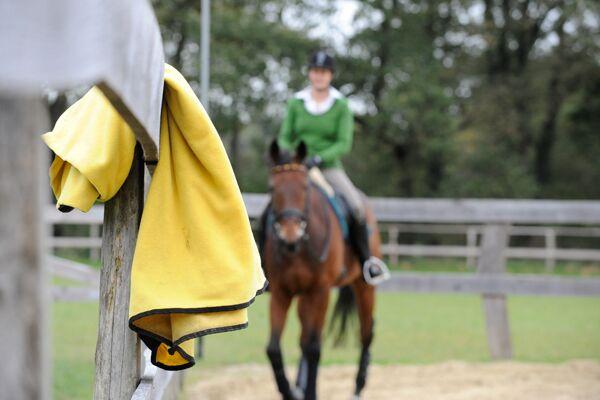 CAV Sinne Pferde 6