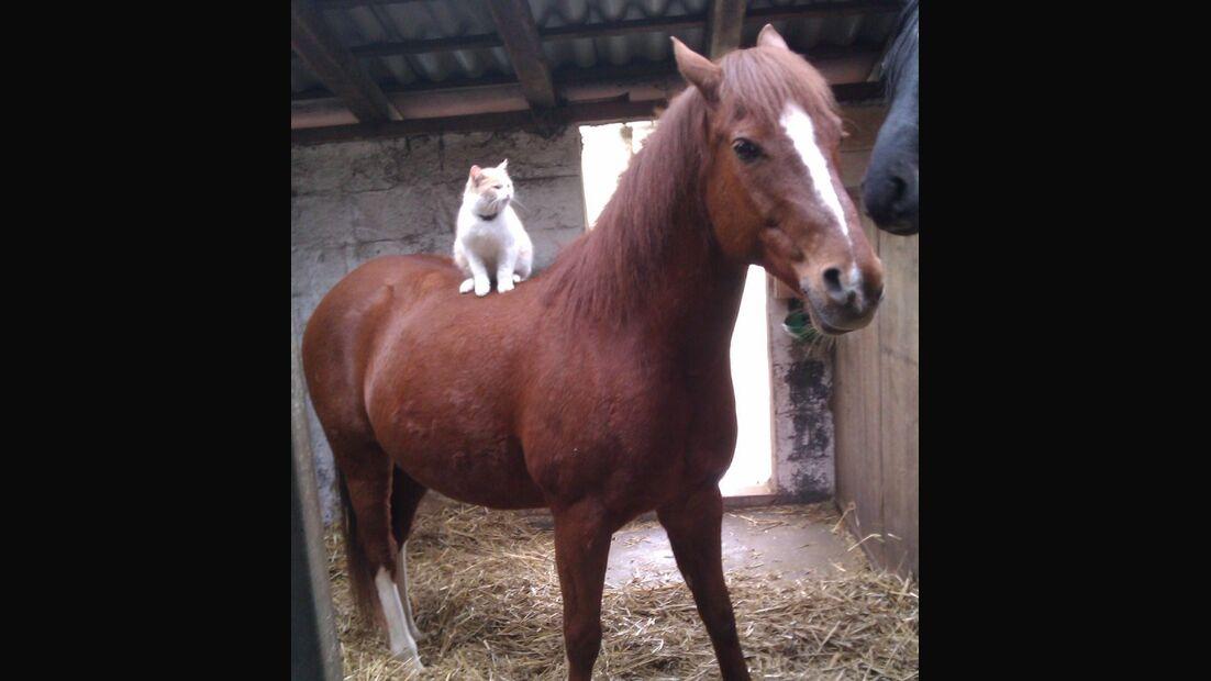 CAV Skurril Witzig Pferdefotos