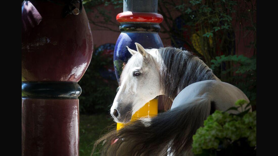 CAV Slawik Hundertwasser Fotokurs