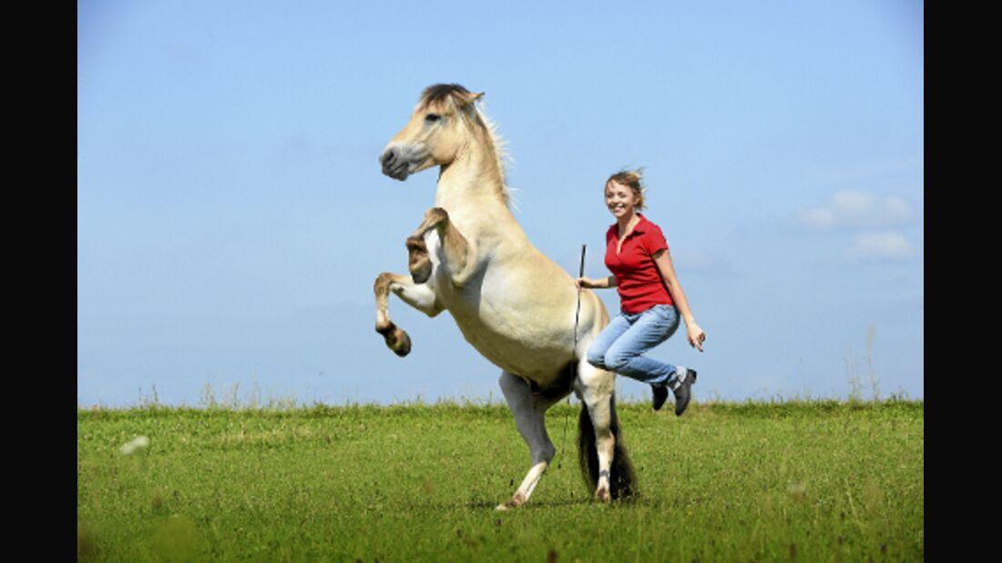 CAV So prägen Sie Ihr Pferd Toffy Ami Fjord Cup