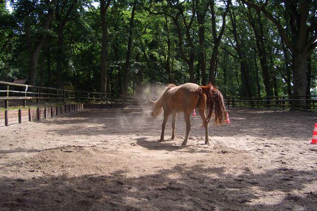 CAV-So-schütteln-sich-Pferde-Leserfotos-Britta-Sünkel