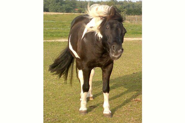 CAV-So-schütteln-sich-Pferde-Leserfotos-Dajana-Gerlach