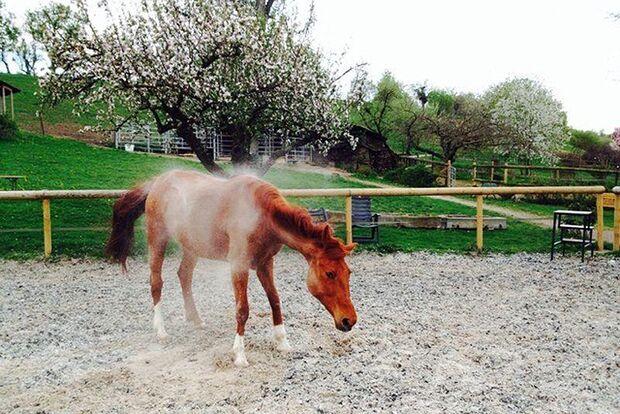 CAV-So-schütteln-sich-Pferde-Leserfotos-Elfy-Krieg