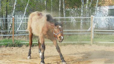 CAV-So-schütteln-sich-Pferde-Leserfotos-Lisa-Laschet