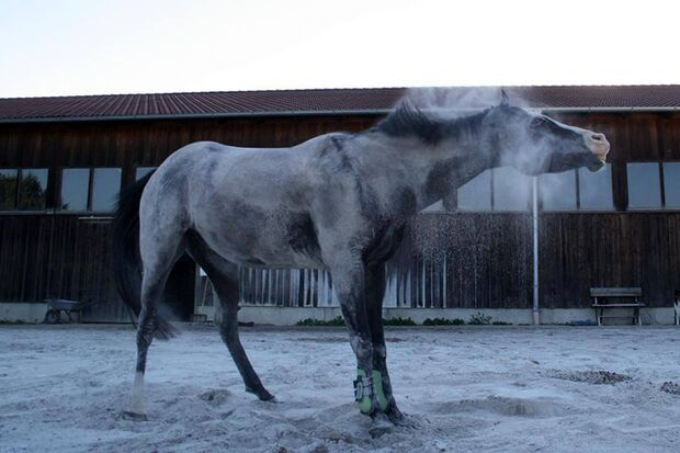 CAV-So-schütteln-sich-Pferde-Leserfotos-Mariella-Bruhn