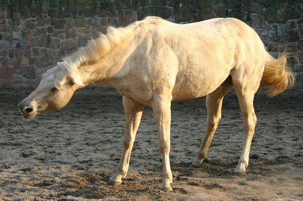 CAV-So-schütteln-sich-Pferde-Leserfotos-Petra Markwart