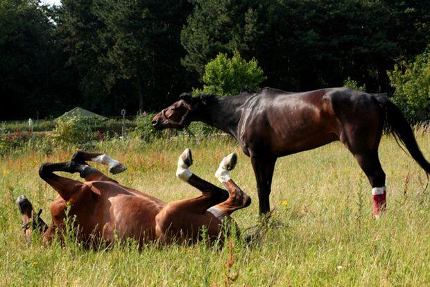 CAV Sommer mit Pferden 2014 - Uschi Amberger