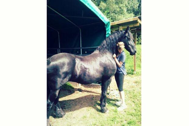 CAV Sommer mit Pferden 2014 - ta_bu