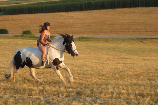 CAV Sommer mit Pferden Anja Link