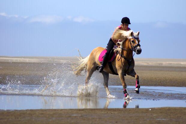 CAV Sommer mit Pferden Anne Cunze
