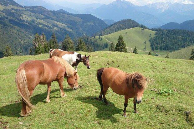 CAV Sommer mit Pferden Claudia Schönherr
