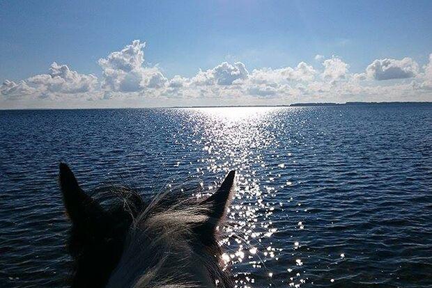CAV Sommer mit Pferden Katharina Laue