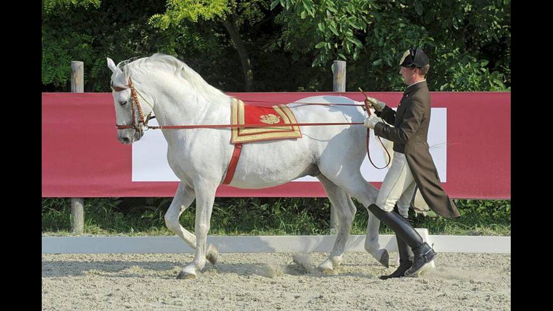 CAV Spanische Hofreitschule Wien Heldenberg 04