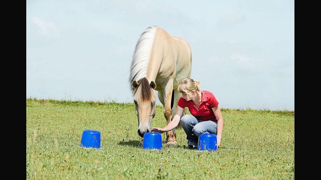 CAV Spielen mit Pferd Intelligenzspiel