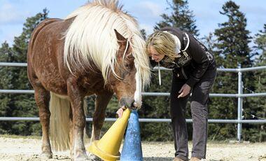 CAV Spielen mit Pferden Hütchenspiel