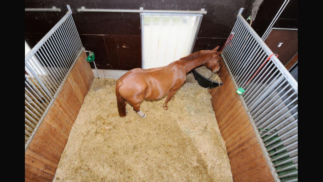 CAV Spielzeug für Pferde 1