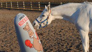 CAV Spielzeug für Pferde 7