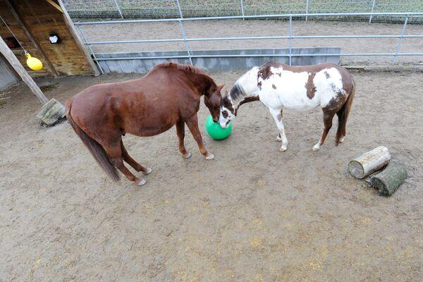CAV Spielzeug für Pferde 8